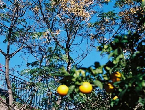Une citronnade rafraîchissante