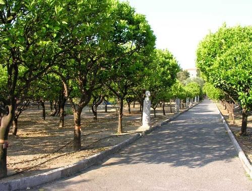 Le jardin du Palais Carnolès